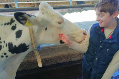 cow-and-boy